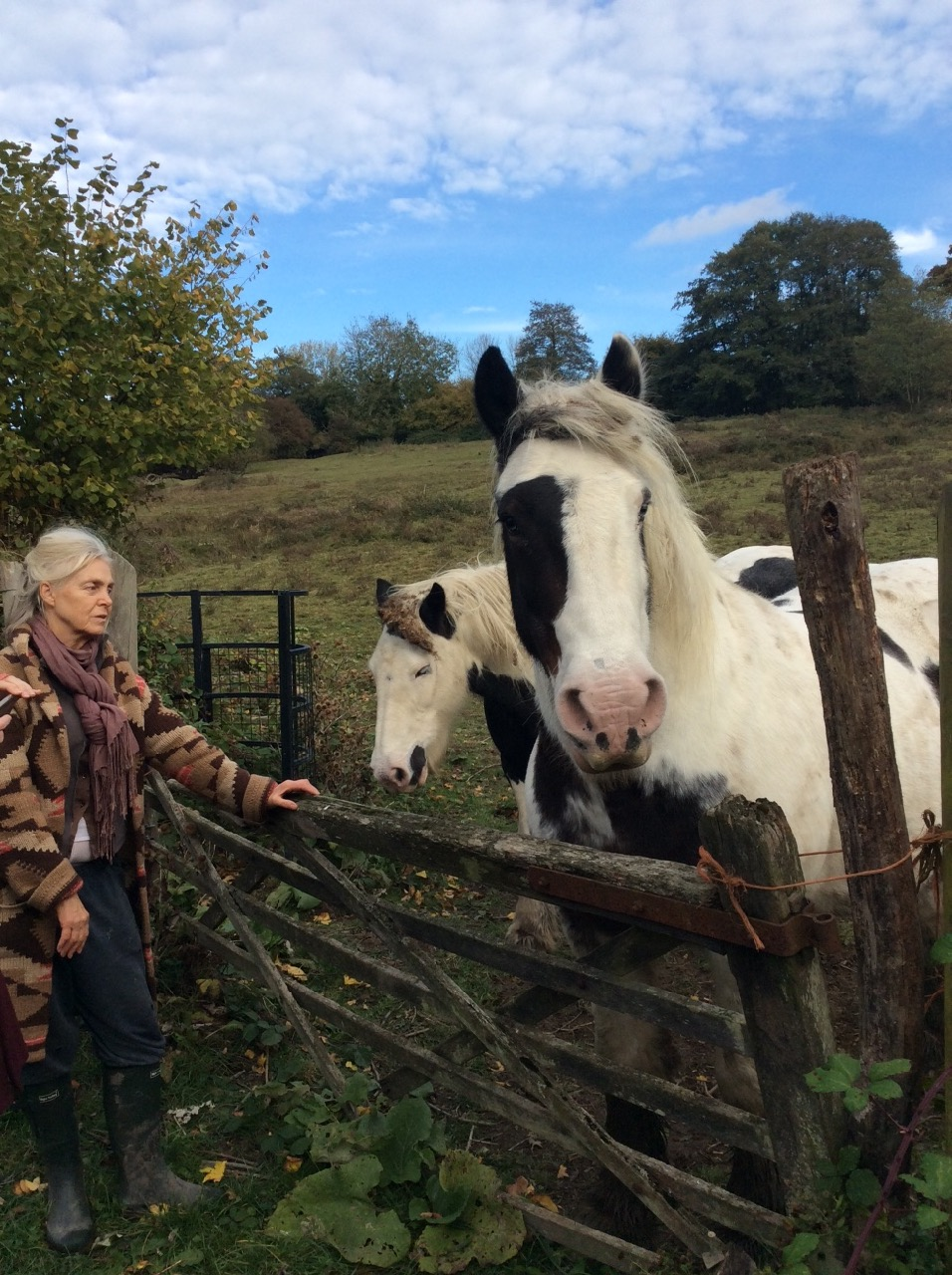 Jacqui and the friendliest horses in the world.