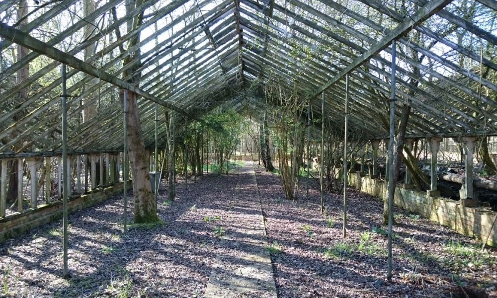 Dilapidated green house overrun by trees at film shoot location Valley